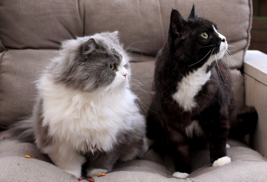 Katten van de trimsalon nunspeet